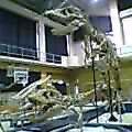 モンゴルの恐竜
